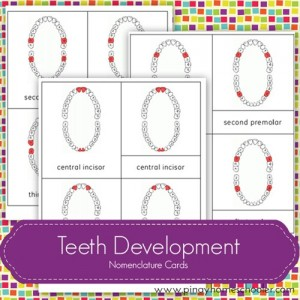 TeethDevelopment[6]